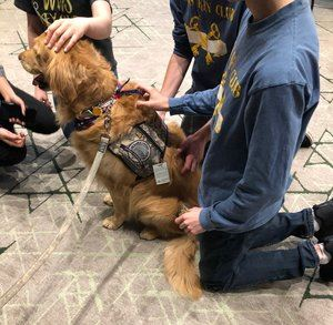 Golden Retriever with teens at the Philanthro Party